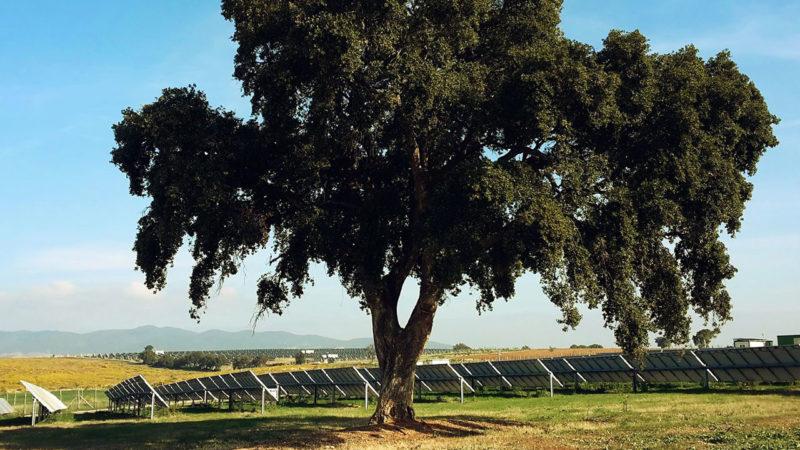 Octopus Investments: rifinanziamento di un portafoglio fotovoltaico nel Lazio